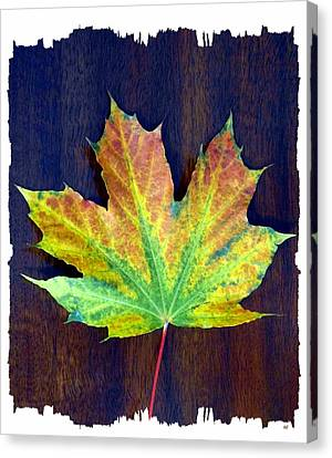 Canvas Print - Days Of Autumn 2 by Will Borden