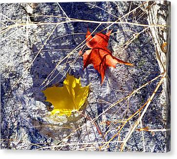Canvas Print - Days Of Autumn 5 by Will Borden