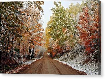 Dazzled By Snow In Autumn Canvas Print by Terri Gostola