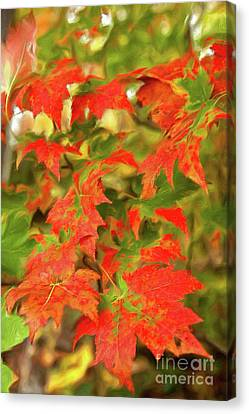 Canvas Print featuring the painting Dazzling Autumn Leaves In The Blue Ridge Ap by Dan Carmichael