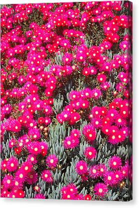Dazzling Pink Flowers Canvas Print