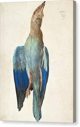 Dead Blue Roller Canvas Print
