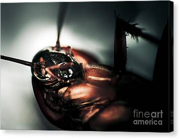 Dead Cockroach Canvas Print by Jorgo Photography - Wall Art Gallery