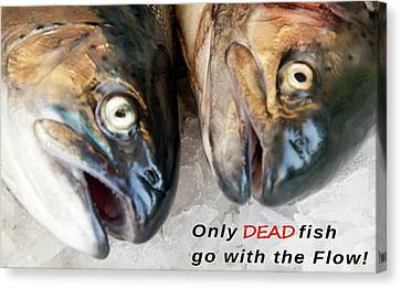 Dead Fish .... Go With The Flow Canvas Print