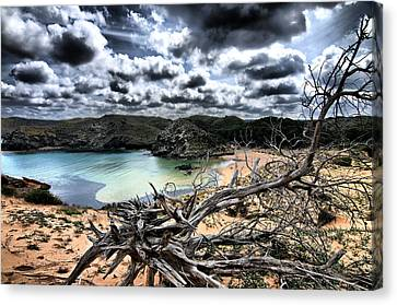 Dead Nature Under Stormy Light In Mediterranean Beach Canvas Print by Pedro Cardona
