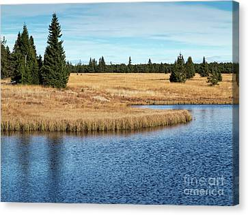 Dead Pond In Ore Mountains Canvas Print by Michal Boubin