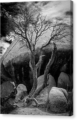 Dead Tree And Boulder At Joshua Tree Canvas Print