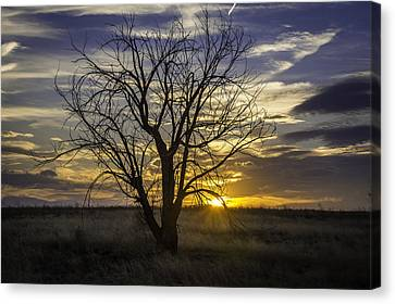 Dead Tree At Sunset Canvas Print by Trish Kusal