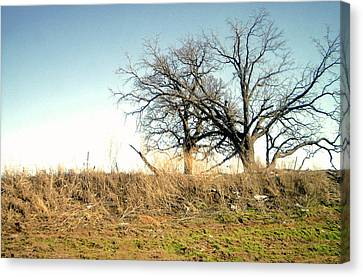 Dead Tree Canvas Print by Chad Taber