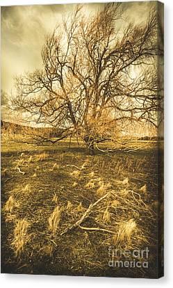 Dead Tree In Seasons Bare Canvas Print