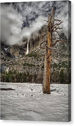 Dead Tree In Yosemite Valley Canvas Print
