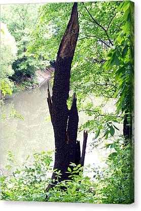 Canvas Print featuring the photograph Dead Tree by Lola Connelly