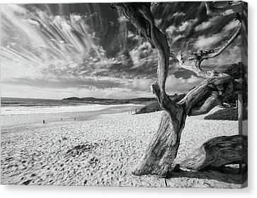 Dead Tree On The Beach Canvas Print by George Oze