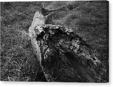 Dead Wood Canvas Print by Bradley Nichol
