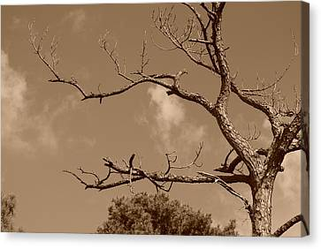 Dead Wood Canvas Print by Rob Hans