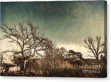 Dead Woodland Canvas Print