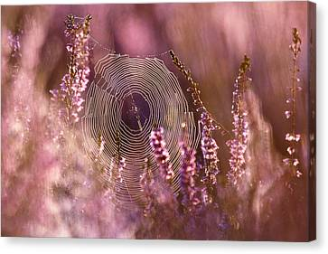 Dear Heather - Heath In Bloom Canvas Print by Roeselien Raimond