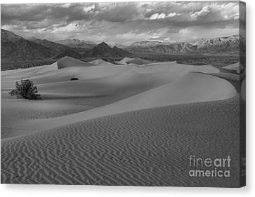 Death Valley Dunes Black And White Canvas Print by Adam Jewell