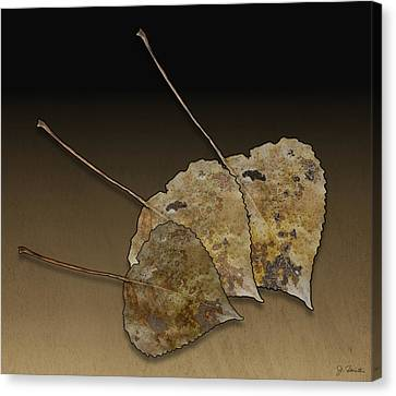 Canvas Print featuring the photograph Decaying Leaves by Joe Bonita