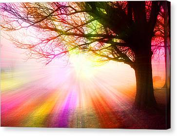 December Fog By The Sleepy Pin Oak Rainbow Burst Canvas Print