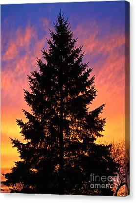 December Sunset Canvas Print by Mark Miller