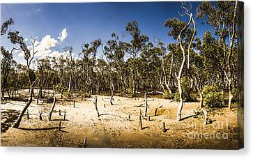 Deception Bay Conservation Park Canvas Print by Jorgo Photography - Wall Art Gallery