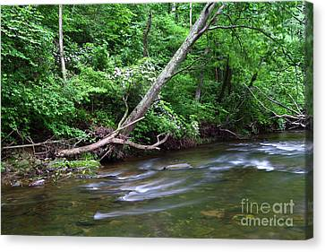 Deciduous Forest Along The Patapsco River Maryland Canvas Print