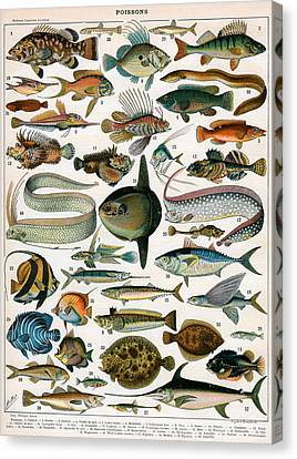 Decorative Print Of Poissons By Demoulin Canvas Print by American School