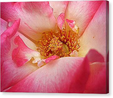 Deep Beauty Canvas Print by Shirley Sirois