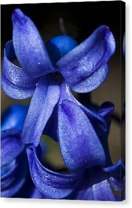Deep Blue Flower Canvas Print by Svetlana Sewell