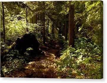 Deep Down The Trail Canvas Print