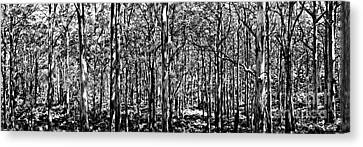 Deep Forest Bw Canvas Print