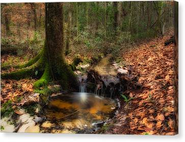 Deep Forest Creek Canvas Print by Rich Leighton