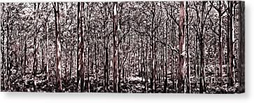 Deep Forest Sepia Canvas Print by Az Jackson