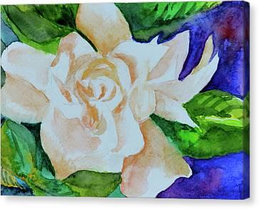 White Gardenia Canvas Print - Deep Gardenia by Beverley Harper Tinsley