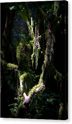 Canvas Print featuring the photograph Deep In The Forest by Lori Seaman
