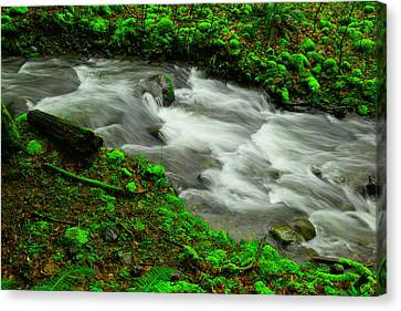 Deep In The Green Canvas Print by Jeff Swan