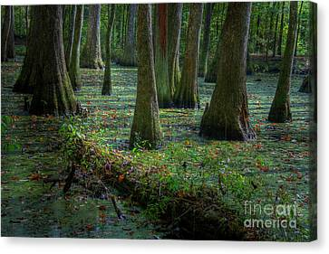 Deep In The Swamp Canvas Print by Larry Braun