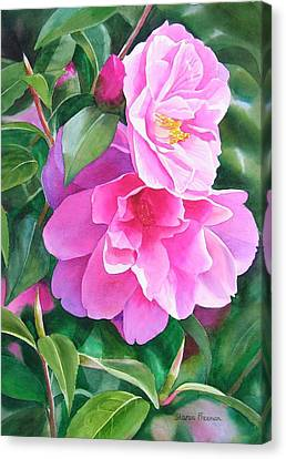 Deep Pink Camellias Canvas Print by Sharon Freeman