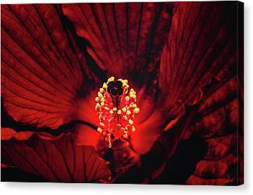 Deep Red Canvas Print by Jae Mishra