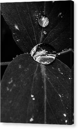 Canvas Print featuring the photograph Deep Refraction Between Leaves by Darcy Michaelchuk