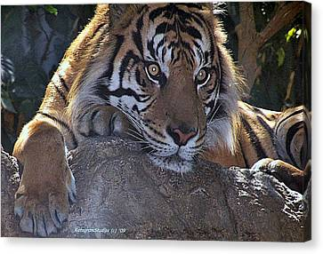 Deep Thought Canvas Print by KatagramStudios Photography