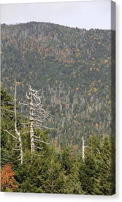 Deeper Into Forest Canvas Print