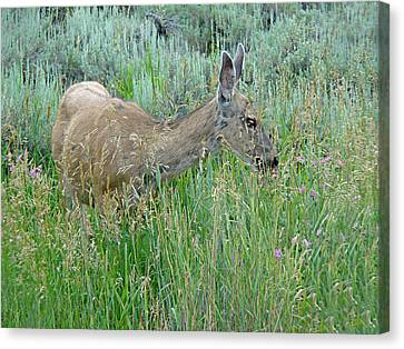 Deer 1 Canvas Print
