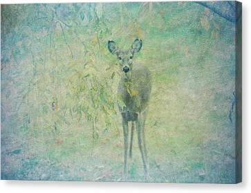 Deer Abby Canvas Print by Bill Cannon