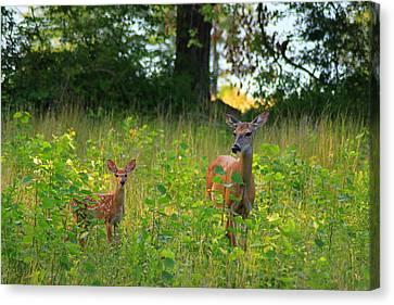 Deer And Fawn Canvas Print by John Burk