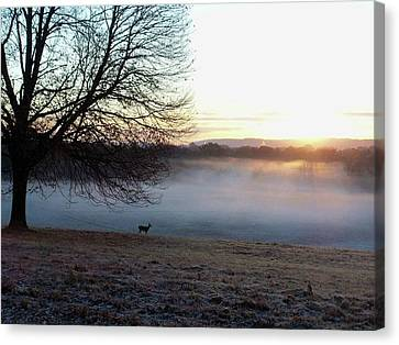 Deer At Dawn Canvas Print