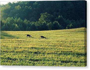 Deer At Dusk Canvas Print by Laurie Perry