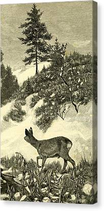 Blizzard Canvas Print - Deer by Austrian School