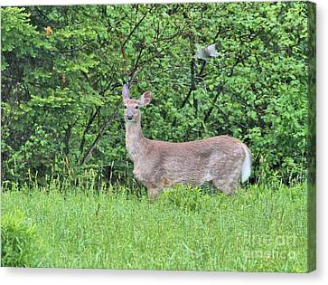 Canvas Print featuring the photograph Deer by Debbie Stahre